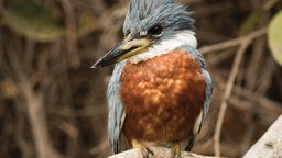 From Doves to Kingfishers
