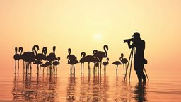 Photography for Birders